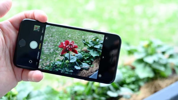 Ảnh chụp bằng iPhone SE 2020